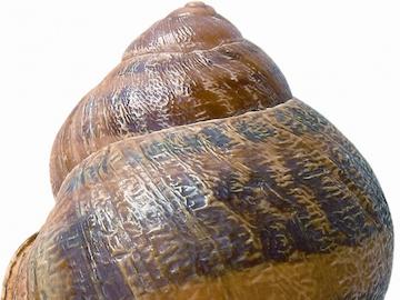 Molluschi terrestri (COSMOS)